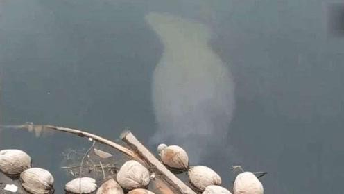 男子正在桥下钓鱼,水中有黑影溜过,走进一瞧兴奋坏了