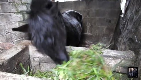 """农村小伙用""""虎头铡""""切草喂马,马儿吃的津津有味,停不下来!"""