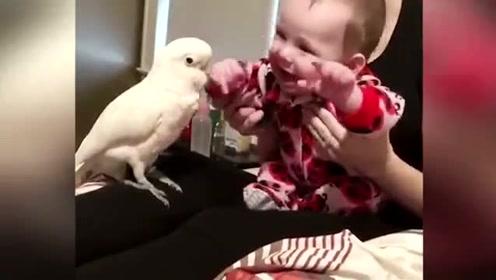 小宝宝第一次见到鹦鹉,妈妈这个东西怎么会说话,好怕