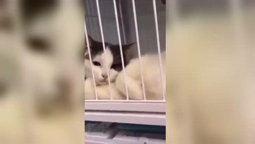 猫:还不打算养我吗