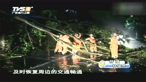 暴雨导致大树倾倒 砸中路过小车