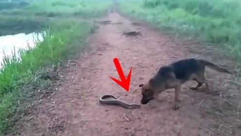 男子河边钓到电鳗不敢抓,大黑狗跑过去一口咬住,下一秒懵圈了