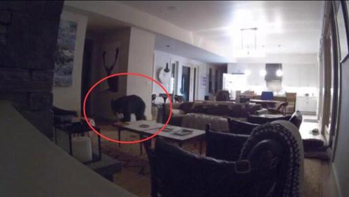 美国一头黑熊闯入居民家中 熟练打开冰箱偷吃冰淇淋