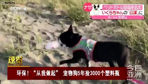 """环保!""""从我做起"""" 宠物狗5年捡3000个塑料瓶"""