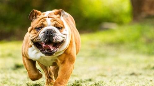世界上最贵的3种狗:第一名价值4000美元,而且还产自中国!