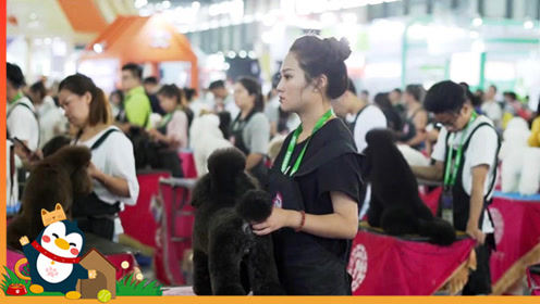 """CKU宠物美容师鉴定考试,数百只宠物同时做造型""""颜控""""最爱"""