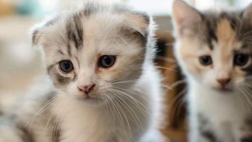 在作死的路上越走越远!可爱猫咪的作死视频!看把主人都逗笑了!