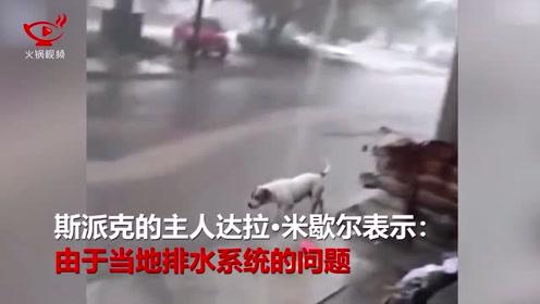 超暖狗狗暴雨过后帮助清理街道垃圾,看完你们还舍得乱扔垃圾吗