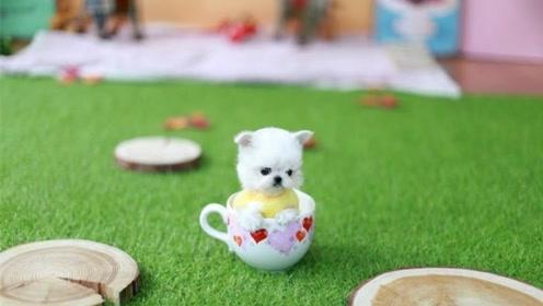 为何茶杯犬那么小?了解背后原因后,让人一阵心酸