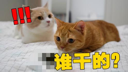 猫咪在床上拉屎被抓,猫:只要我埋的够快,妈就不知道是我干的