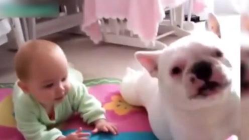 萌宝,你这么跟狗狗一起爬?你是想跟它玩耍吗?