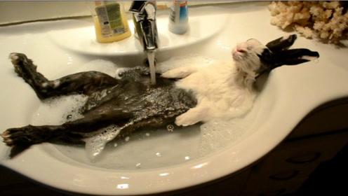 为何养兔子时都不给兔子洗澡?听完饲养员解释后,顿时茅塞顿开