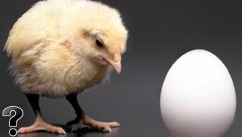 先有鸡还是先有蛋?科学家终于找到答案,看完很多人都不相信!