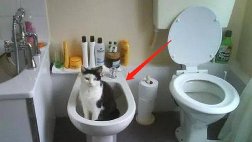 欧洲酒店厕所竟然有两个马桶,到底是干嘛用的?看完不要再弄错啦