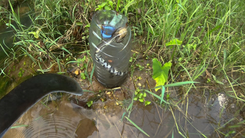 小伙用矿泉水瓶做捕鱼工具,放在水沟几天后,抓到的竟然不是鱼