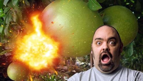 神奇炸弹树:我一言不合就会爆炸,有本事你就靠近我!
