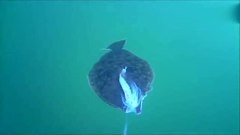 实拍:高清记录水底怪鱼上钩过程,看后瞬间涨见识了!