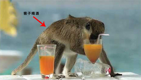 """猴子竟会喝酒,抱着酒杯的样子像个""""酒鬼"""",结局让人捧腹大笑!"""