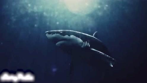 1500万年前的海洋霸主牙齿巨大拥有巨大的咬合力