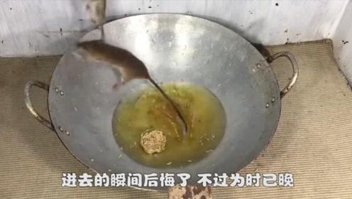 老鼠跳进锅里偷油吃,吃饱才发现不对劲,为了贪吃把命搭上