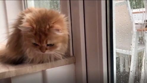 当你选择要养一只猫咪时,你应该先做好什么?2