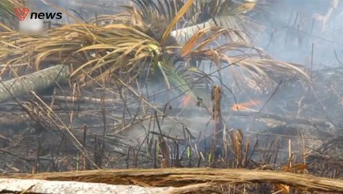 印尼森林大火,马来西亚和新加坡也惨遭烟雾侵袭