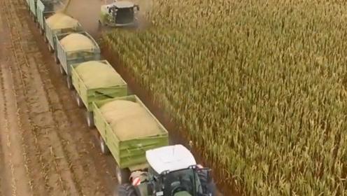 """德国人开""""火车""""收玉米?场面堪称""""财大气粗"""",一次能收60吨"""