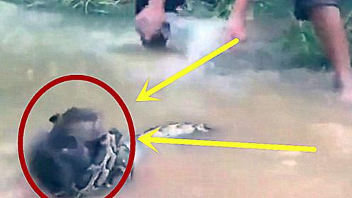 猴子溺水濒临死亡,男孩准备上前搭救,看清后竟撒腿就跑!