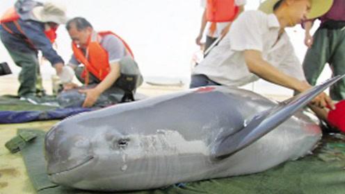 """在33年内杀了3人!原来海豚的""""微笑"""",才是世界最残忍的骗局"""