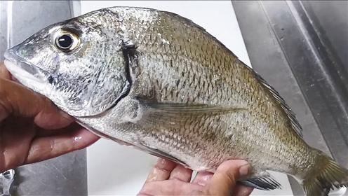 钓到的黑鲷鱼,拿回家烤着吃!