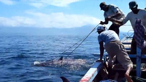 捕鲸者靠一把鱼叉捕杀抹香鲸,一年捕杀到6条,全村人分吃!