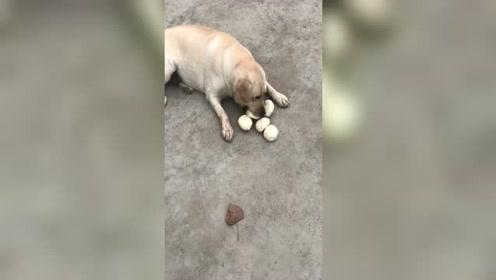 狗狗:心有多大,我的嘴就有多大