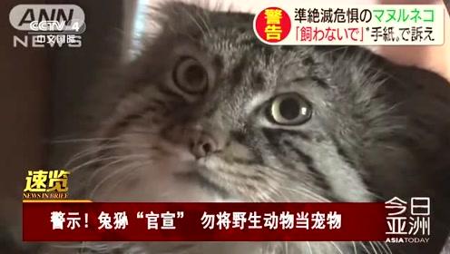 """警示!兔狲""""官宣"""" 勿将野生动物当宠物"""