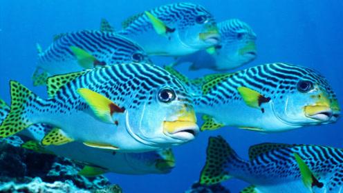 """在鱼身上绑个摄像头,""""鱼摄影师""""在水里能拍到什么?大开眼界"""