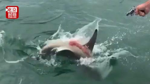 用快艇拖拽鲨鱼数小时使其成碎片!法官居然这么判?