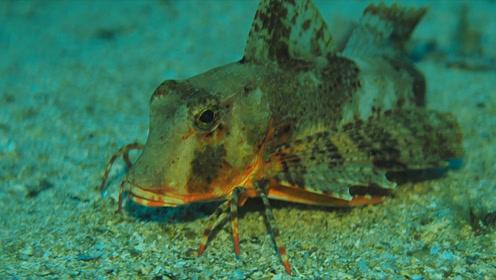 """男子潜水发现""""未知""""生物,非凡的鱼""""走""""在水里,镜头记录全程"""
