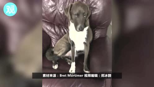 当狗狗看到主人拿出旅行箱