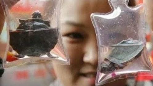 各种小昆虫被商贩装在袋内,做成钥匙扣后卖游客,月入万元
