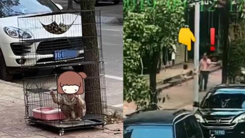 网传小女孩被关路边笼子里 网友愤怒举报给警方:真相却是个乌龙