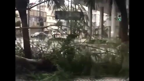 """台风""""塔巴""""侵袭日本造成3万户停电 大树被连根拔起"""