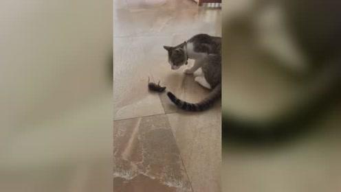 老鼠:能不能放过我?我上有老下有小 猫:滚 老鼠:好嘞