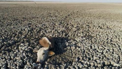 窒息画面!非洲湖泊即将干涸 数百动物身陷泥泞绝望等死