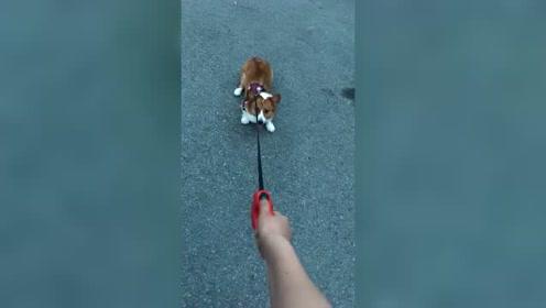 狗子:玩归玩,不带急眼的