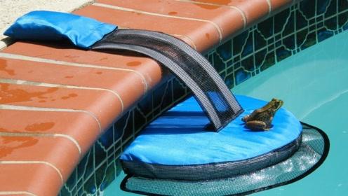 美国大叔这项小发明,能拯救无数小生命,中国的泳池都应配备!