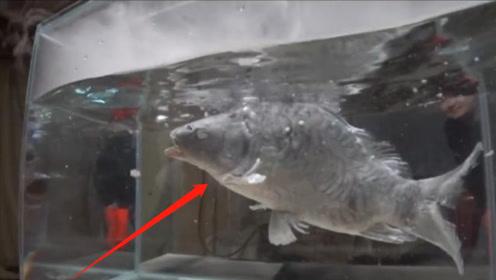 人掉进-200℃液氮会怎样?老外扔活鱼进去,结局让人头皮发麻