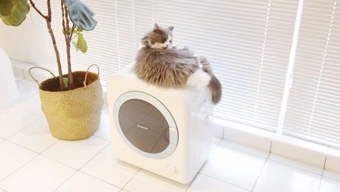 衣服晾不干?试试这款冷暖双模式烘干利器,还能过滤宠物毛!