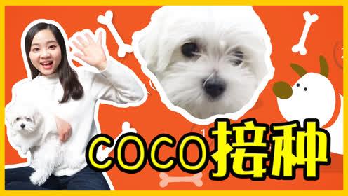 小狗coco去宠物医院接种疫苗咯!  小伶玩具