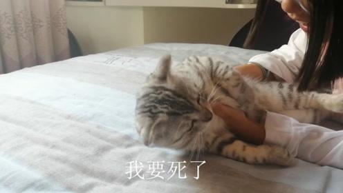 """猫咪午睡被强行""""弄醒"""",一脸懵逼绝望,猫:我要死了"""
