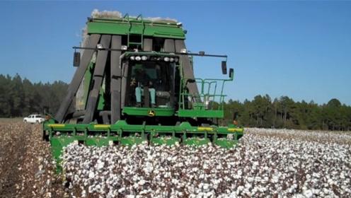 国外巨型棉花包收割机,效率是人工的15-20倍,不用人工采了