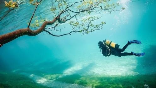 全世界最任性的公园,冬天要潜水观光,网友:去了一次还要去!